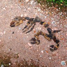 rust 10) schieferfossilfind messel web