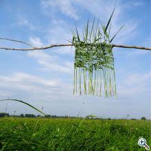 rust 10) untitled reedsquare aufdemsand web