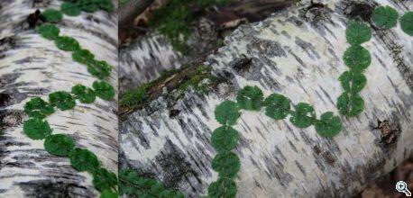 rust 4) ferncircles waldkunstpfad web