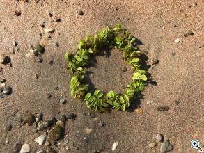zaveri 5) 23 8 2017 rhine beach web